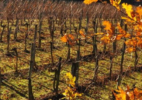 Le vignoble Irouleguy